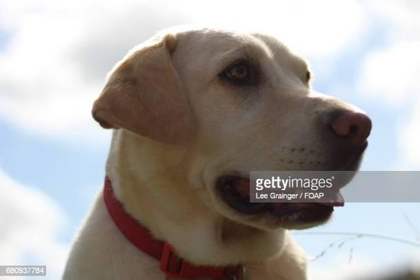 Close-up of a dog against sky