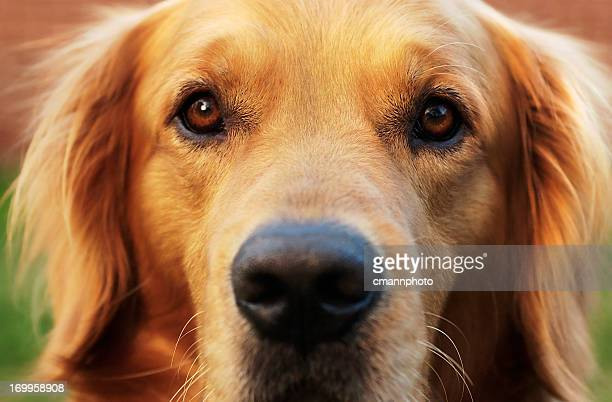 Close-up of a Dog Eyes and face