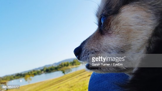 Close-Up Of A Dog Looking Away On Landscape