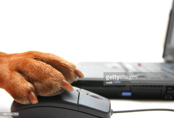 Closeup of a dog paw using a computer mouse