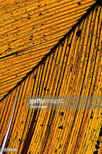 Close-up of a dry leaf in a botanical garden, Hawaii Tropical Botanical Garden, Hilo, Big Island, Hawaii Islands, USA : Stock Photo