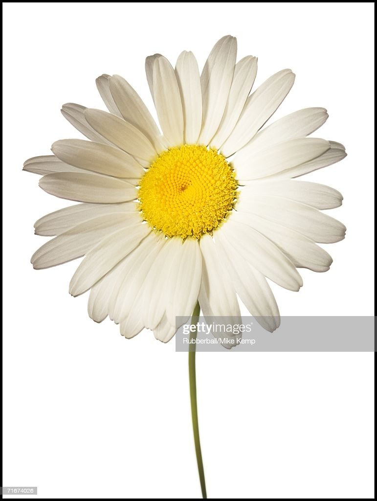 Close-up of a flower : Stock Photo
