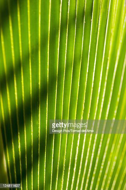 Close-up of a green leaf, green lines with a sharp shadow thrown across it.