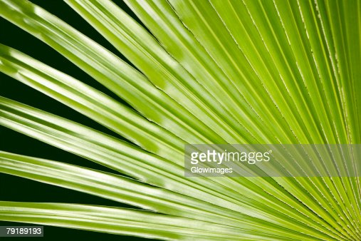 Close-up of a green leaf in a botanical garden, Hawaii Tropical Botanical Garden, Hilo, Big Island, Hawaii Islands, USA : Foto de stock