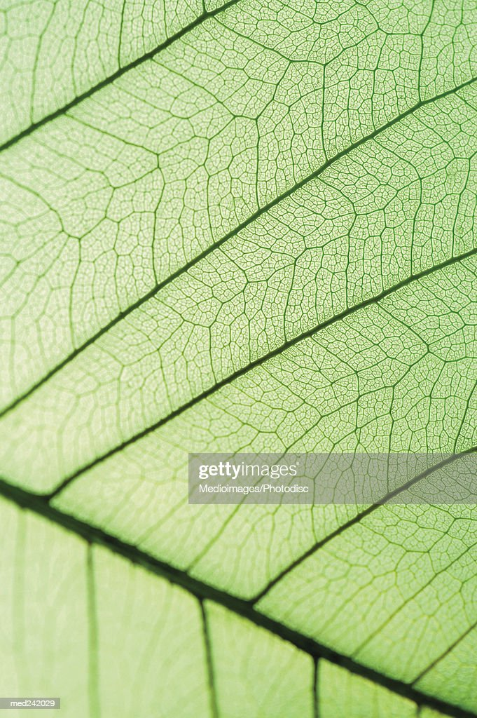 Close-up of a green leaf : Stock Photo