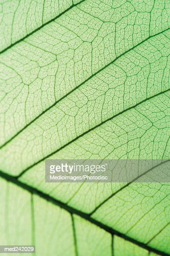 Close-up of a green leaf : Foto stock