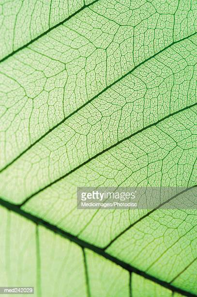Close-up of a green leaf