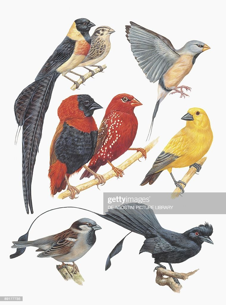Closeup of a group of birds