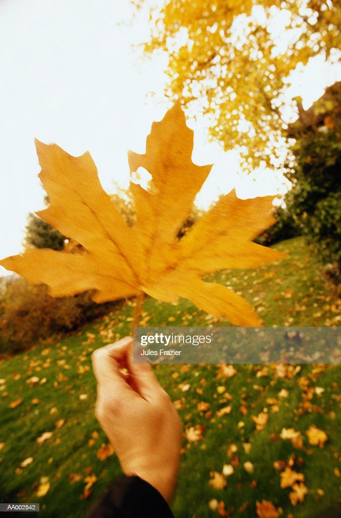 Close-up of a Hand Holding an Autumn Leaf : Stock Photo