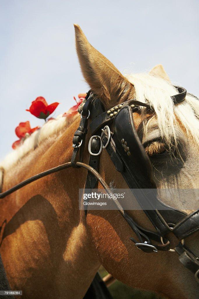 Close-up of a horse, Charleston, South Carolina, USA : Stock Photo