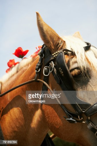 Close-up of a horse, Charleston, South Carolina, USA : Foto de stock