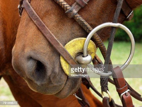 Close-up of a horse wearing a bridle : Foto de stock