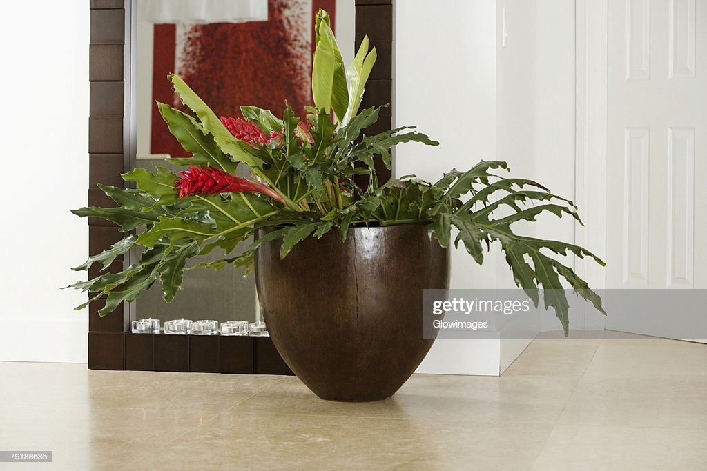 Close-up of a houseplant in front of a mirror : Foto de stock