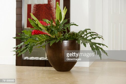 Close-up of a houseplant in front of a mirror : Stock Photo