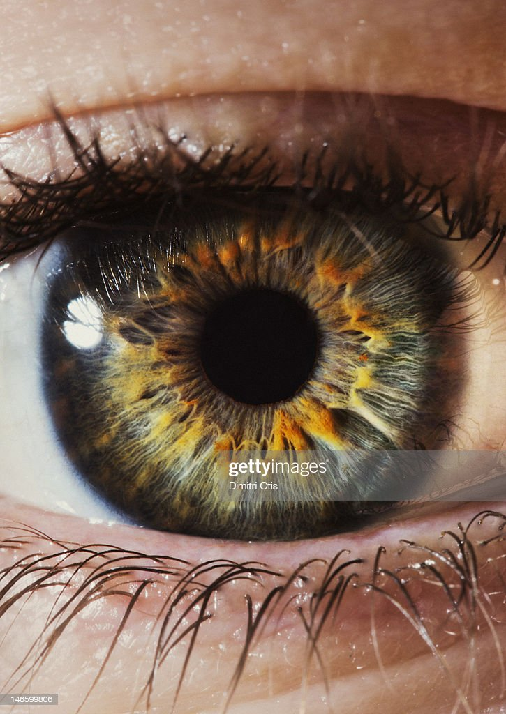 Close-up of a human eye and iris : Stock Photo