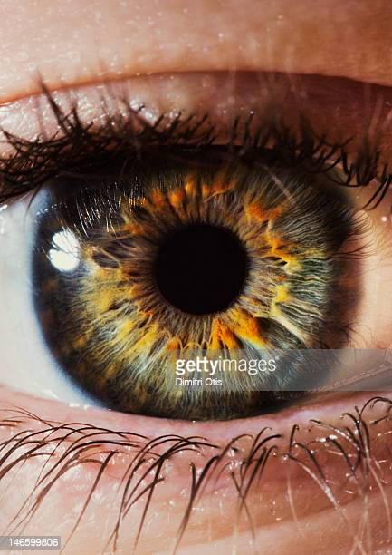 Close-up of a human eye and iris