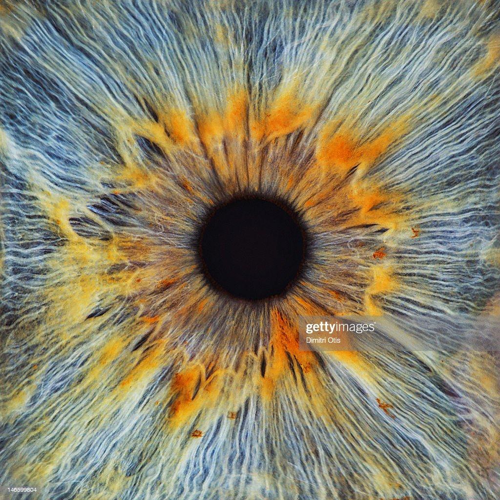 Close-up of a human eye, pupil and iris : Stock Photo