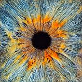 Close-up of a human eye, pupil and iris