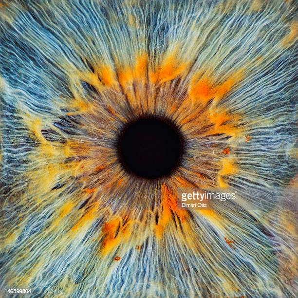 Close-up of a human eye, pupil and iris