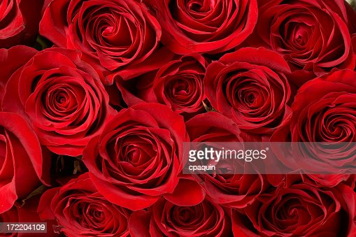 A close-up of a large bouquet of red roses