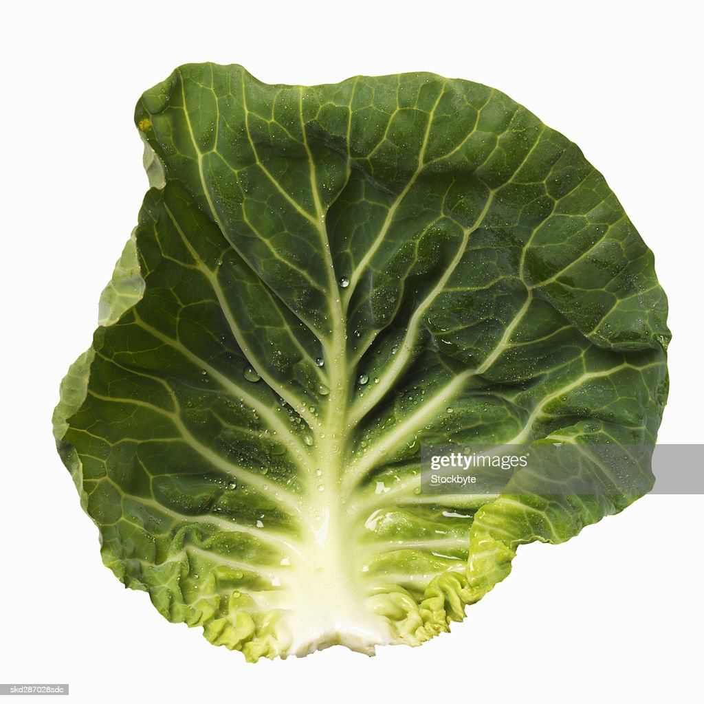Close-up of a leaf of cabbage : Stock Photo