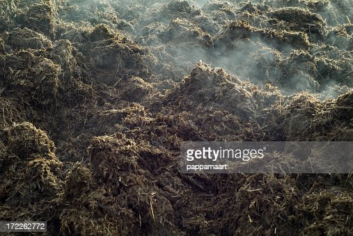 Close-up of a lot of steaming manure