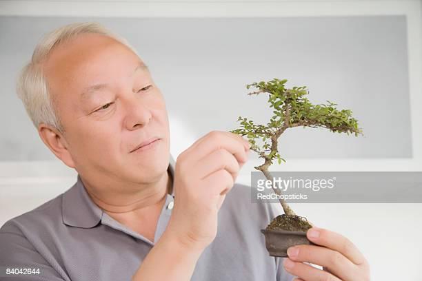 Close-up of a mature man holding a bonsai tree