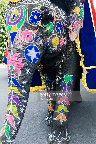 Close-up of a painted elephant, Elephant Festival, Jaipur, Rajasthan, India