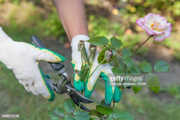 Close-up of a person's hand gardening