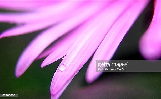 Close-Up Of A Pink Flower