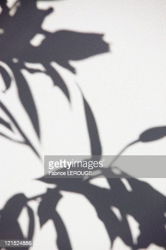 Close-up of a plant shadow on a wall