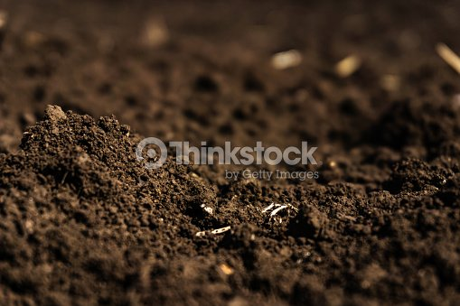 Closeup of a plowed field, fertile, black soil. : Stock Photo