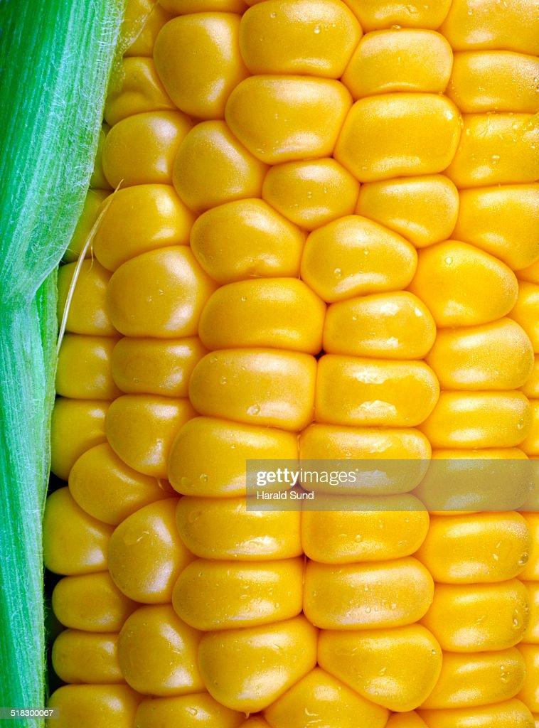 Closeup of a ripe yellow corn kernels