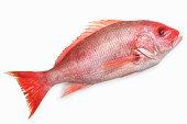 Close-up of a snapper fish