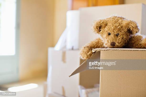 Close-up of a soft toy in moving box