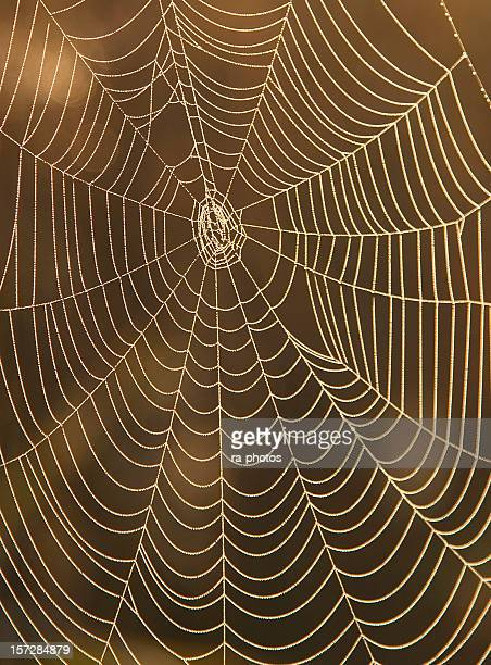 Close-up of a spider web on brown background