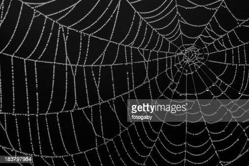 Close-up of a spiderweb silk details on black background