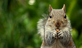 This picture was taken in a park. It shows a squirrel eating a peanut. The left part of the picture lets space for text end designs.