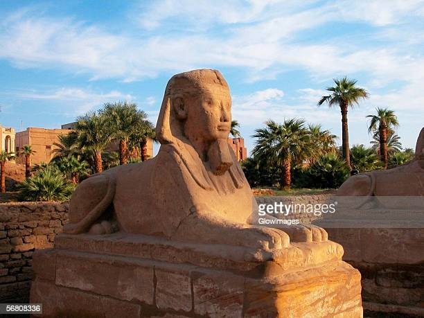 Close-up of a statue, Temple Of Luxor, Luxor, Egypt