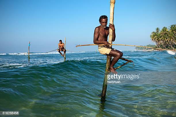 Gros plan d'un Échasse les pêcheurs en action, de Ceylan