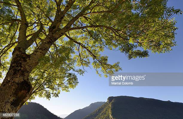 Close-up of a tree among mountains