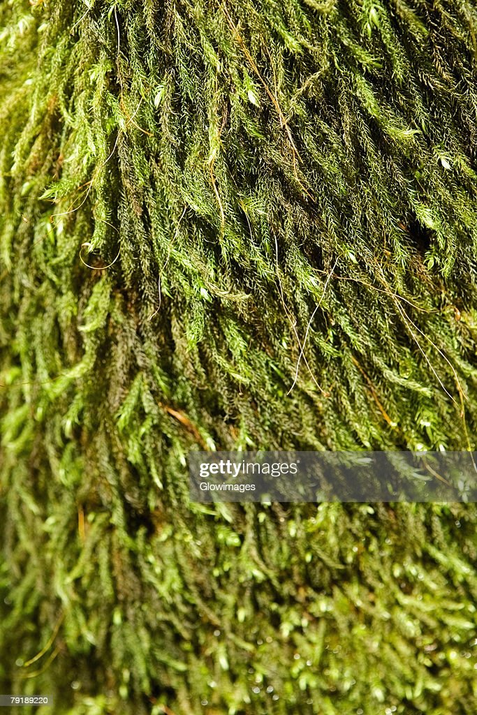 Close-up of a tree in a botanical garden, Hawaii Tropical Botanical Garden, Hilo, Big Island, Hawaii Islands, USA : Foto de stock