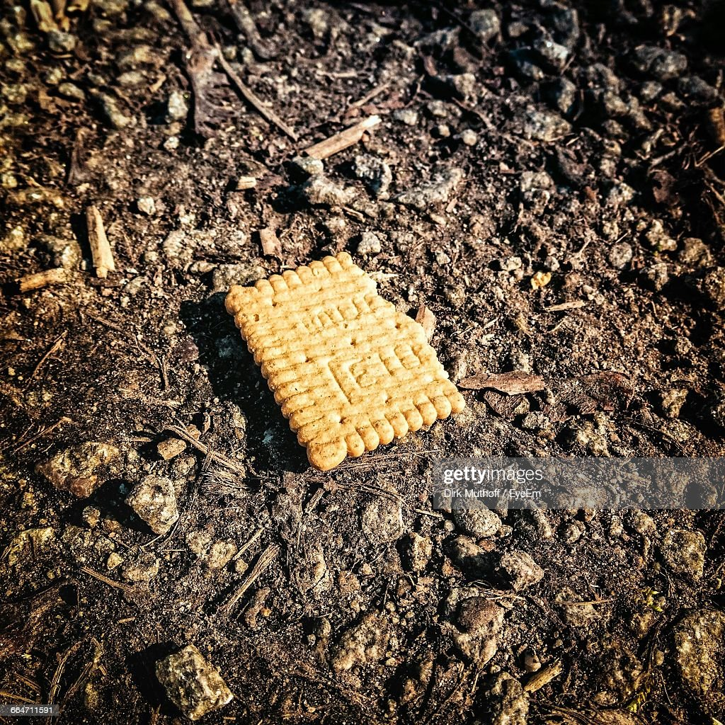 Close-Up Of Abandoned Biscuit On Field During Sunny Day