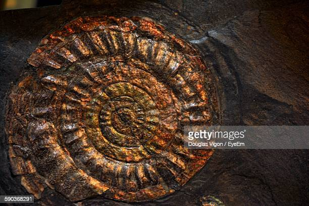 Close-Up Of Ammonite Fossil On Rock