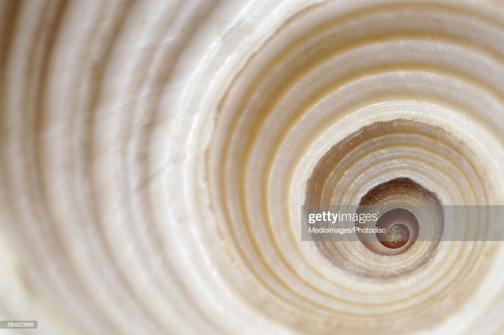 Close-up of an animal shell : Stock Photo