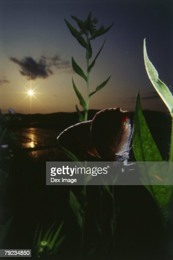 Close-up of an insect on leaf at sunset : Stock Photo