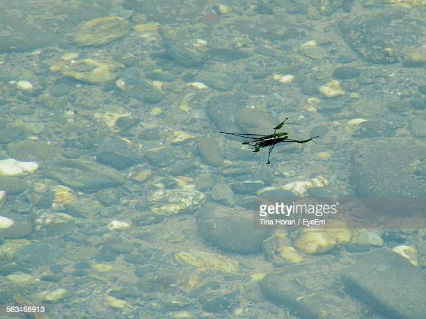 Close-Up Of An Insect On Shallow Water