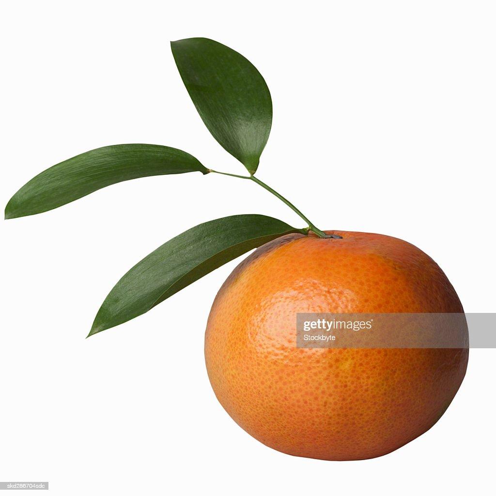 Close-up of an orange : Stock Photo