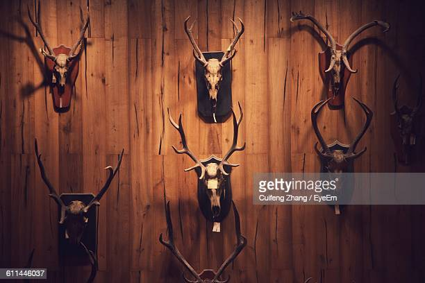 Close-Up Of Animal Heads Mounted On Wooden Wall