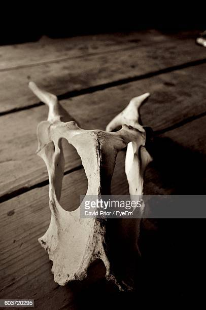 Close-Up Of Animal Skull On Table